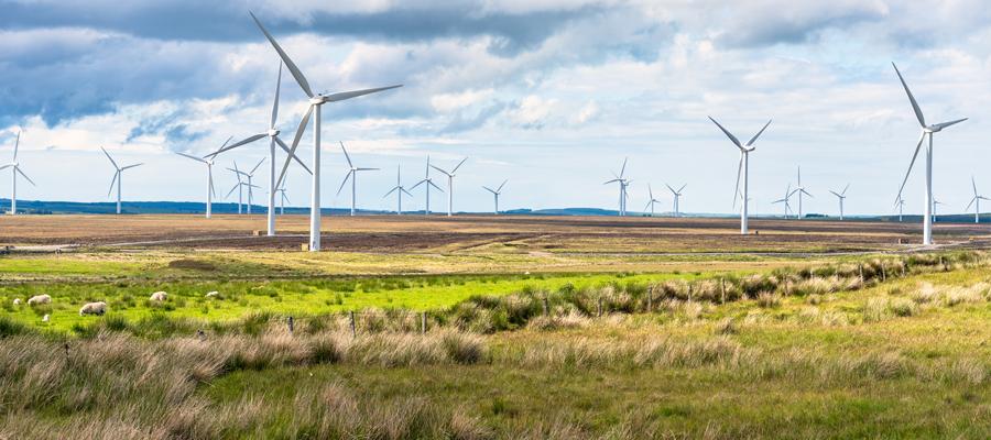 Wind turbines, sustainable, field